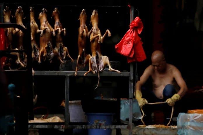 Coronavirus - Une ville chinoise interdit désormais la consommation de chiens et de chats