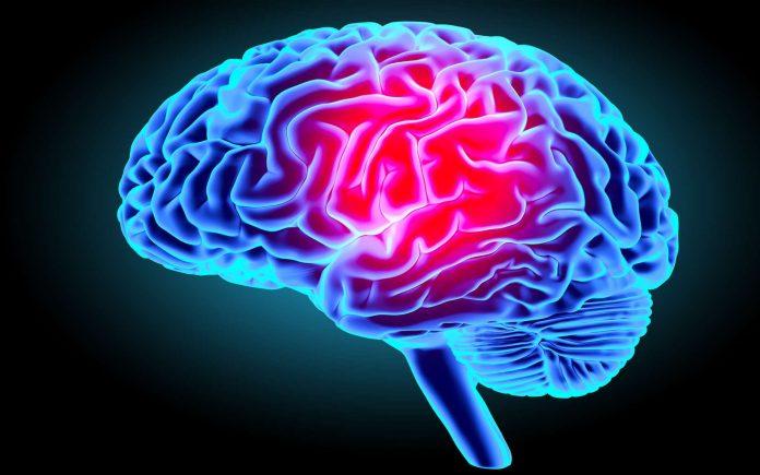 Coronavirus : le COVID-19 pourrait également s'attaquer au cerveau
