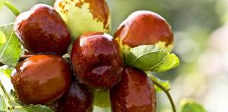 Ramadan : L'Algérie a exporté plus de 1000 tonnes d'un produit vers la France