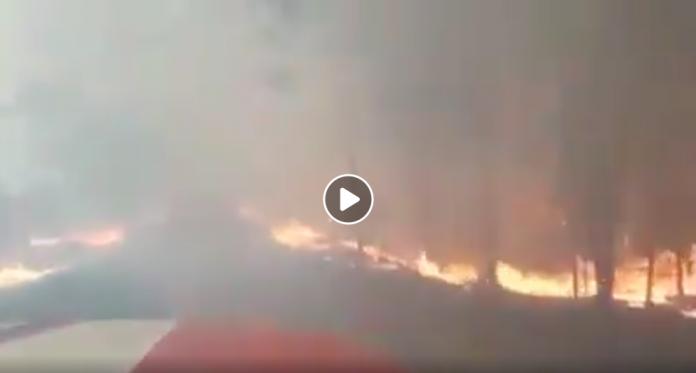 Ukraine des incendies de forêt s'approchent dangereusement du site de Tchernobyl VIDEO