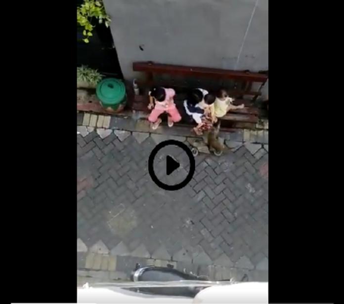 Indonésie : un singe à moto tente de kidnapper un enfant - VIDÉO