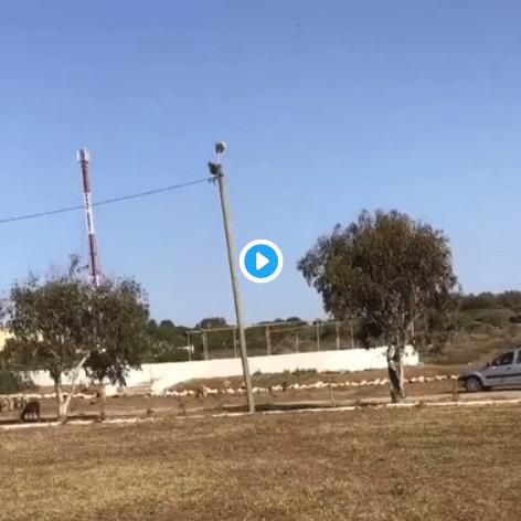 Maroc un expatrié français tue sauvagement les moutons d'un jeune berger et le menace de mort - VIDEO