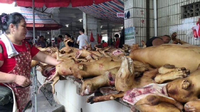 En pleine épidémie, la Chine démarre son Festival de la viande de chien
