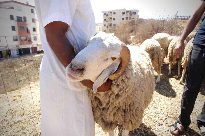 Algérie - des professeurs en médecine s'opposent à la célébration de l'Aïd el-Adha