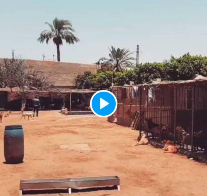 Egypte la vidéo émouvante d'un chien aveugle qui accueille un soignant dans un refuge (1)