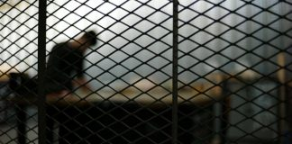 Algérie - un lycéen condamné à un an de prison ferme pour fraude au brevet national
