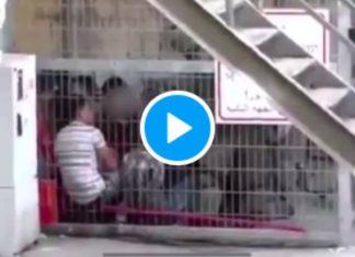 Les images terrifiantes d'enfants palestiniens mis en cage par des soldats israéliens