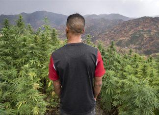 A l'ONU, le Maroc vote pour la dépénalisation du cannabis