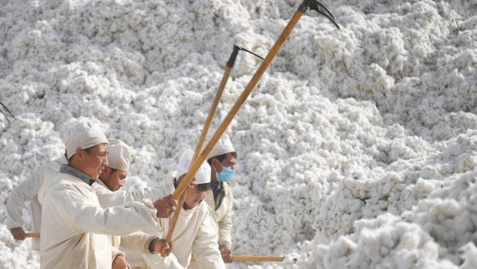 Chine - plus de 570 000 Ouïghours forcés à cueillir du coton selon un rapport