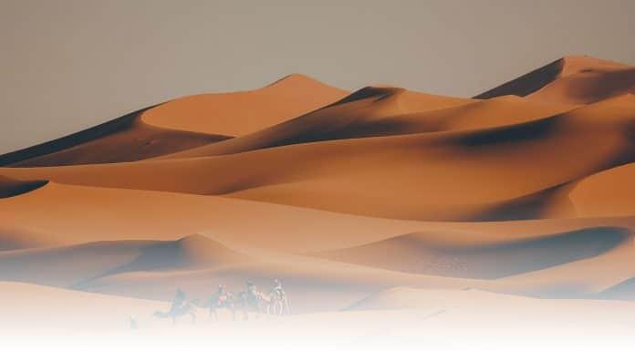 Des scientifiques découvrent l'existence de 2 milliards d'arbres dans le Sahara