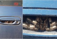 Une femme découvre une araignée géante logée dans la porte de sa voiture