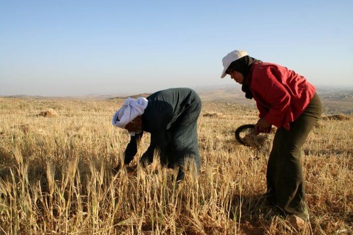 Des Palestiniens retrouvent leurs terres après plus de 40 ans d'attente - VIDEO