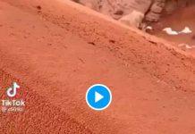 Arabie saoudite le désert recouvert de neige et d'une fine couche de sable - VIDEO