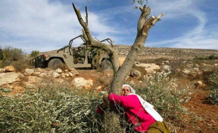 Israël détruit une réserve naturelle et déracine plus de 10 000 arbresIsraël détruit une réserve naturelle et déracine plus de 10 000 arbres
