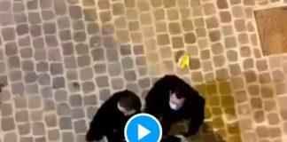Paris des policiers frappent et insultent un jeune homme sans savoir qu'ils étaient filmés - VIDEO