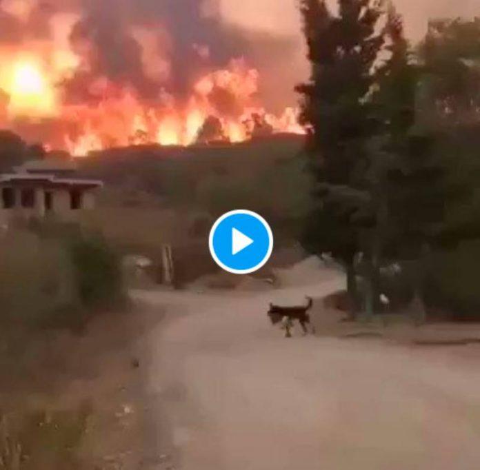 Algérie de gigantesques incendies brûlent la Kabylie, sept morts - VIDEO