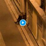 Paris un policier pris en flagrant délit de violences sur un homme menotté - VIDEO