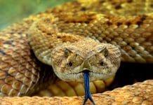Sarthe une femme se retrouve face à un serpent sous sa douche