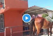 Turquie un homme vend sa voiture pour se déplacer à cheval - VIDEO